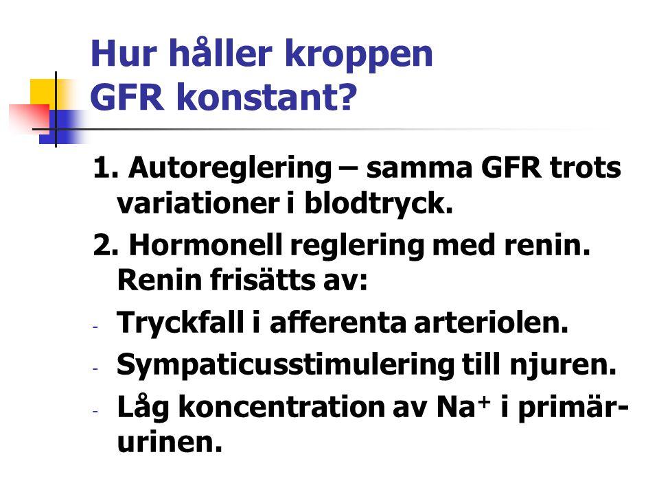 Hur håller kroppen GFR konstant? 1. Autoreglering – samma GFR trots variationer i blodtryck. 2. Hormonell reglering med renin. Renin frisätts av: - Tr