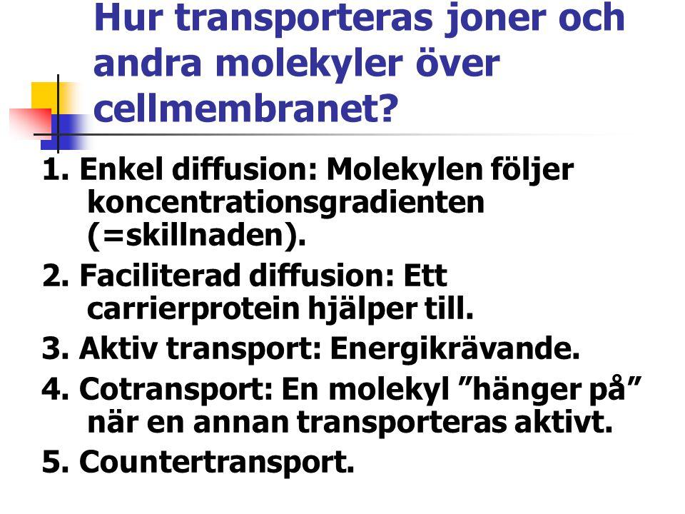 Hur transporteras joner och andra molekyler över cellmembranet? 1. Enkel diffusion: Molekylen följer koncentrationsgradienten (=skillnaden). 2. Facili