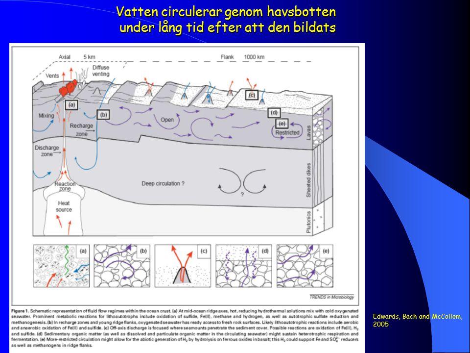 Vatten circulerar genom havsbotten under lång tid efter att den bildats Edwards, Bach and McCollom, 2005
