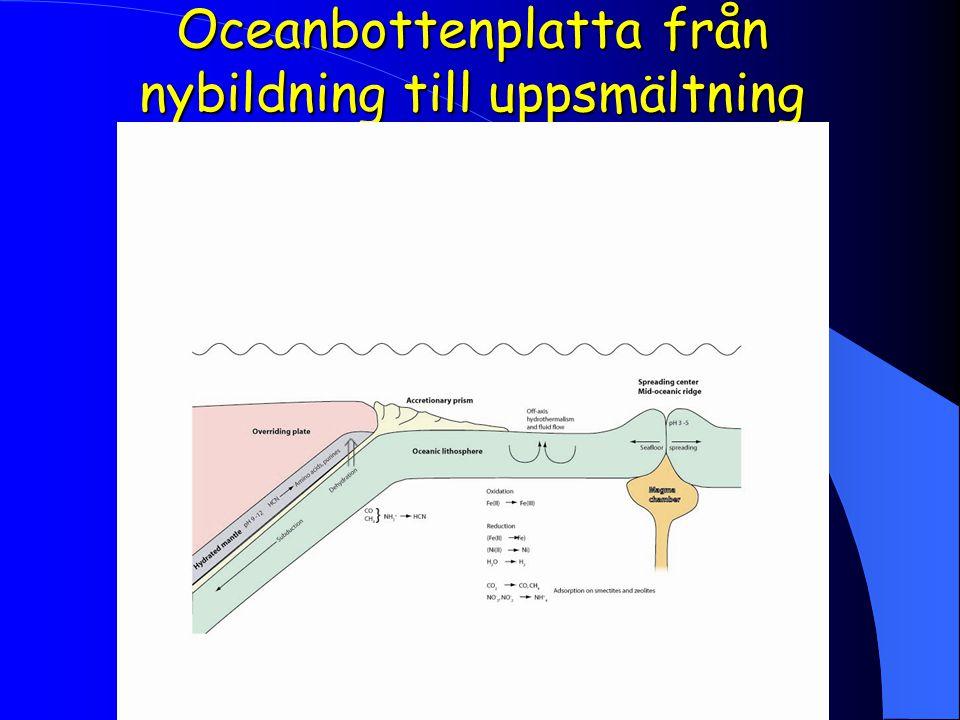 Oceanbottenplatta från nybildning till uppsmältning