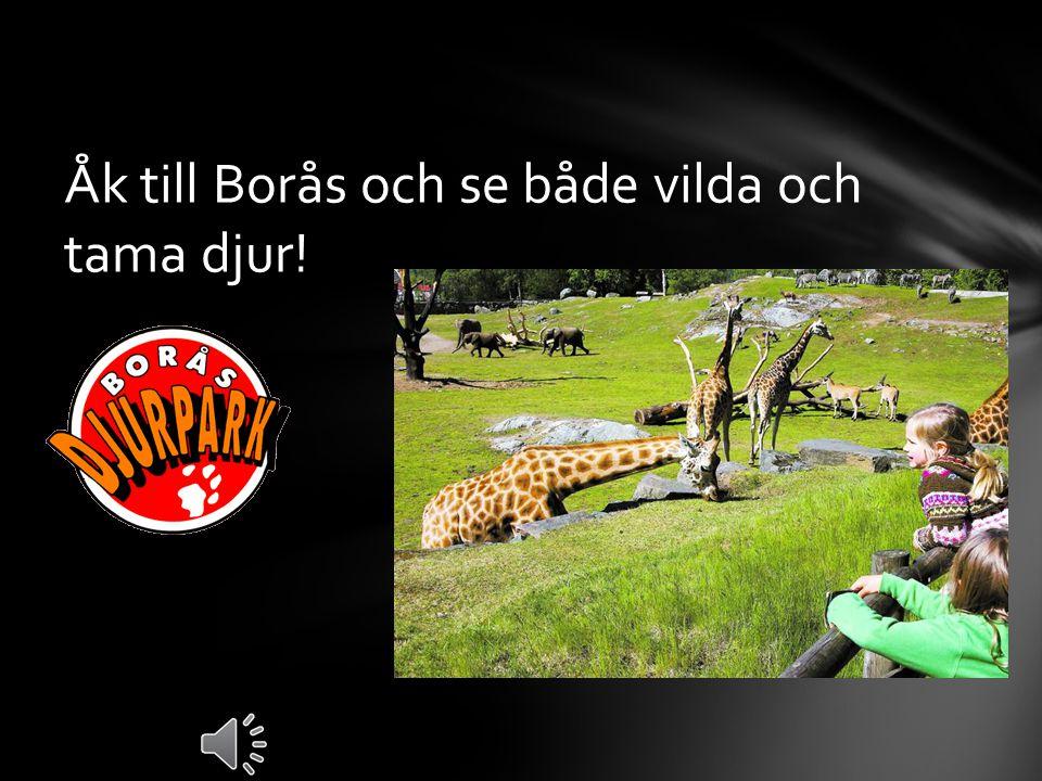 Om du är varm åk till Åby badet och åk vatten ruschkanor