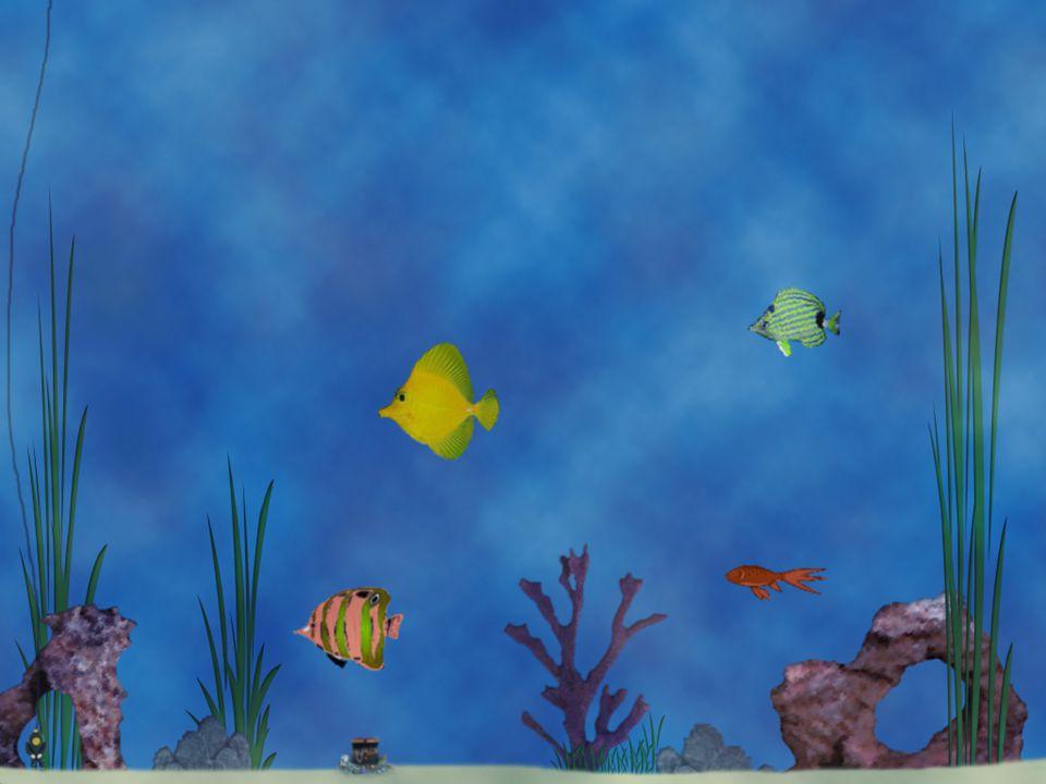 Prototyp 5 Fler fiskar av varje art i olika storlekar.