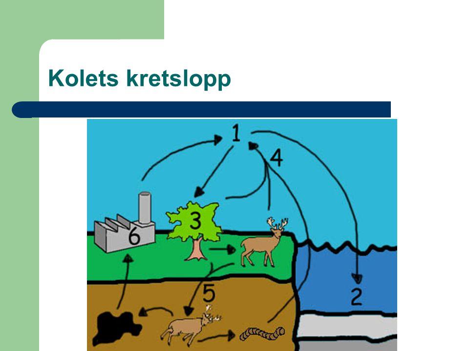 Fotosyntes Koldioxid + vatten +solljus  socker + syre 6CO 2 + 6H 2 O + solljus  C 6 H 12 O 6 + 6O 2