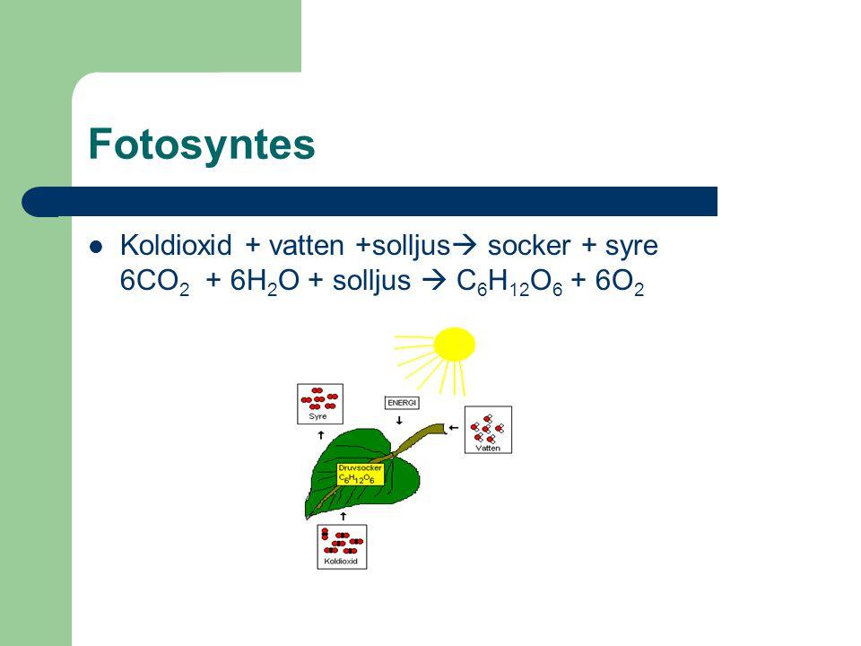Cellandning Socker + syre  koldioxid + vatten C 6 H 12 O 6 + 6O 2  6CO 2 + 6H 2 O
