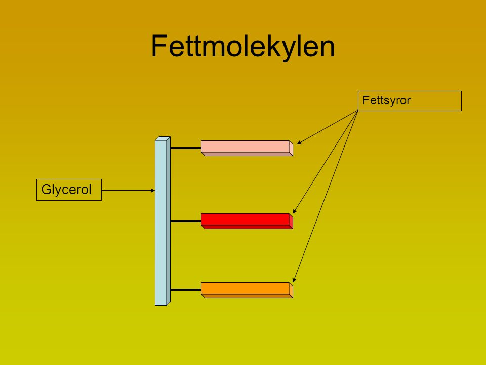 Fettmolekylen Glycerol Fettsyror