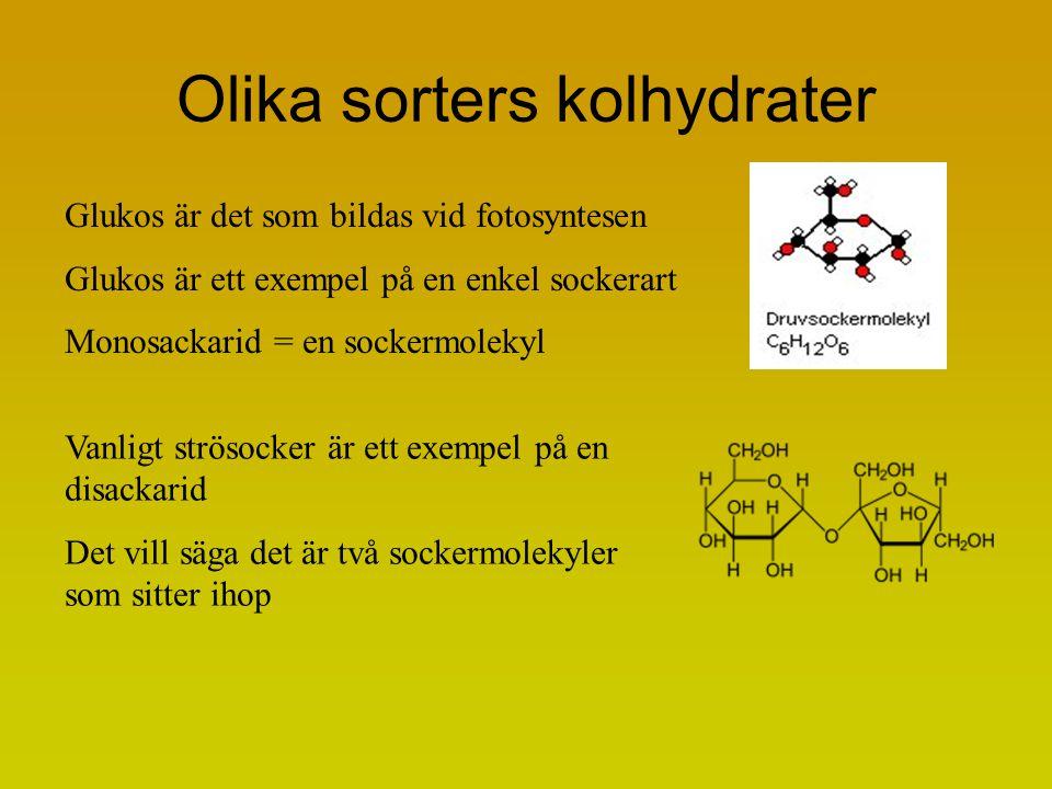 Olika sorters kolhydrater Glukos är det som bildas vid fotosyntesen Glukos är ett exempel på en enkel sockerart Monosackarid = en sockermolekyl Vanligt strösocker är ett exempel på en disackarid Det vill säga det är två sockermolekyler som sitter ihop