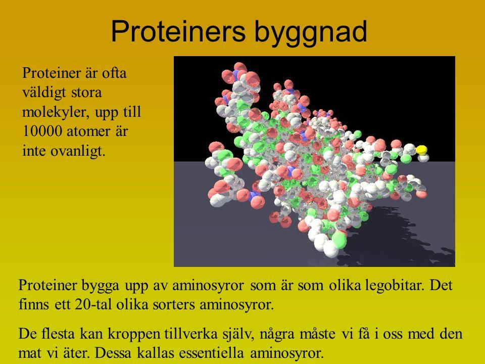 Proteiners byggnad Proteiner bygga upp av aminosyror som är som olika legobitar. Det finns ett 20-tal olika sorters aminosyror. De flesta kan kroppen