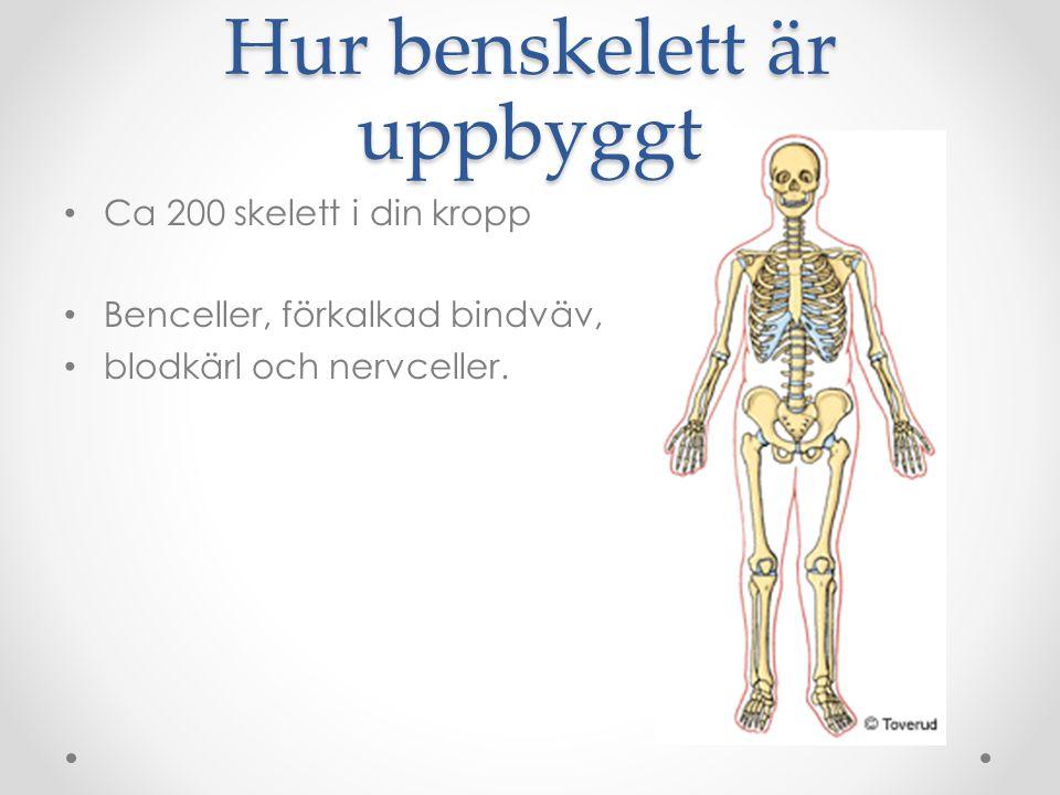 Hur benskelett är uppbyggt Ca 200 skelett i din kropp Benceller, förkalkad bindväv, blodkärl och nervceller.