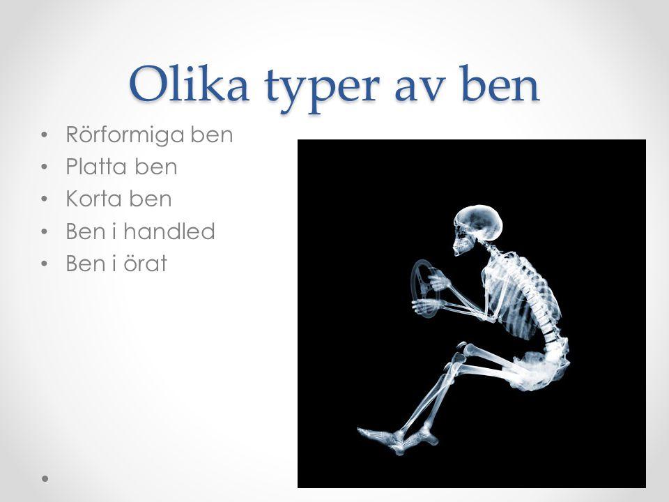 Olika typer av ben Rörformiga ben Platta ben Korta ben Ben i handled Ben i örat