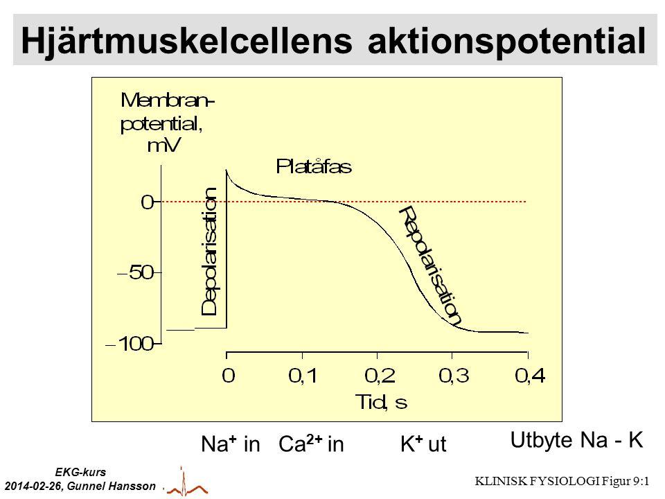 EKG-kurs 2014-02-26, Gunnel Hansson Hjärtmuskelcellens aktionspotential Na + inCa 2+ inK + ut Utbyte Na - K KLINISK FYSIOLOGI Figur 9:1