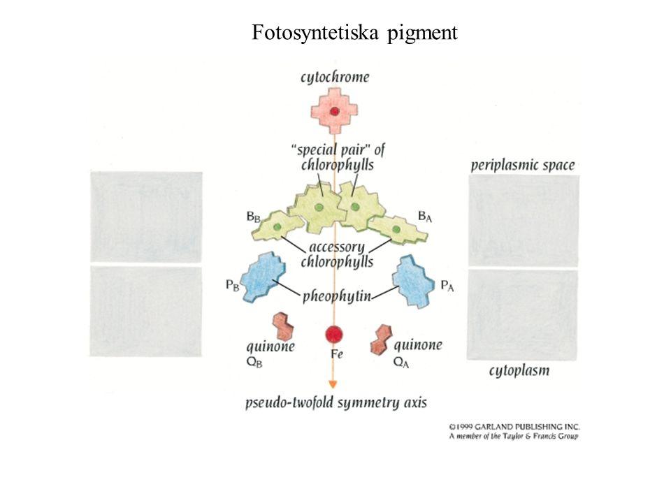 Fotosyntetiska pigment