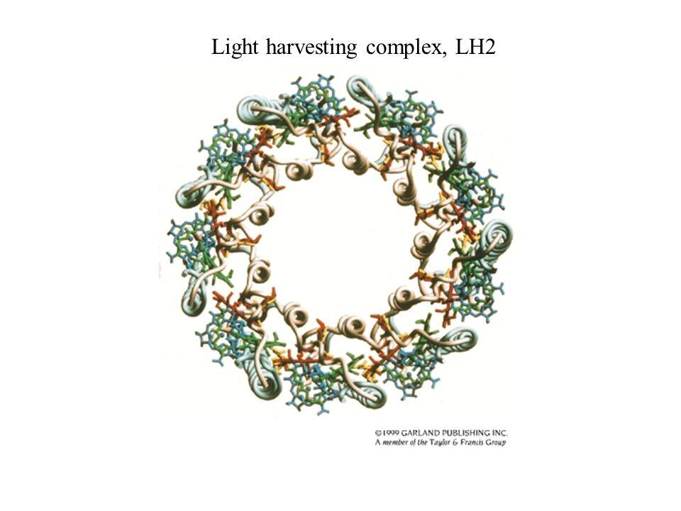 Light harvesting complex, LH2
