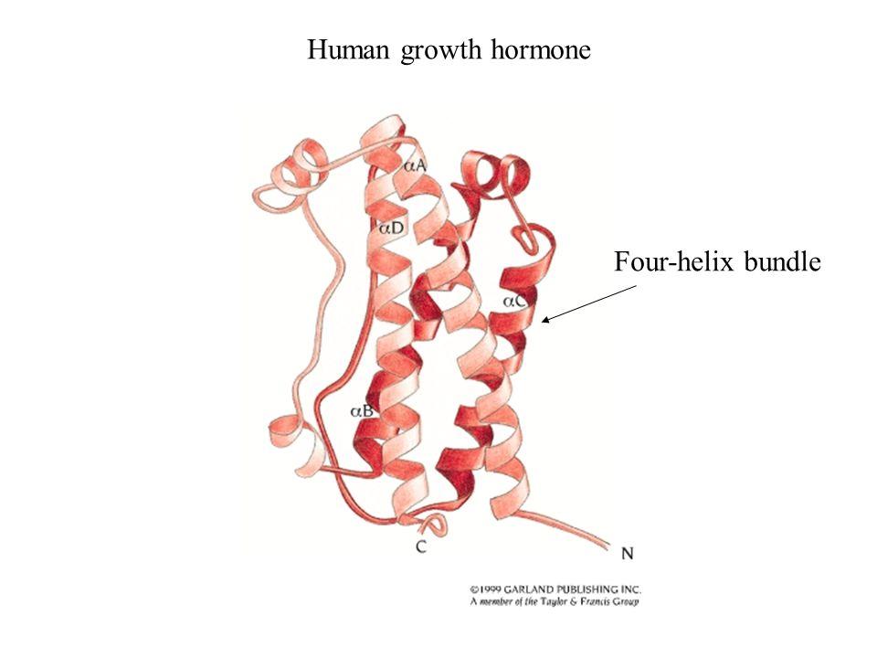 Human growth hormone Four-helix bundle