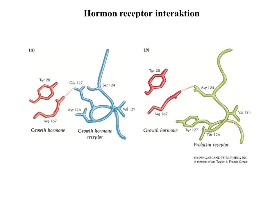 Hormon receptor interaktion