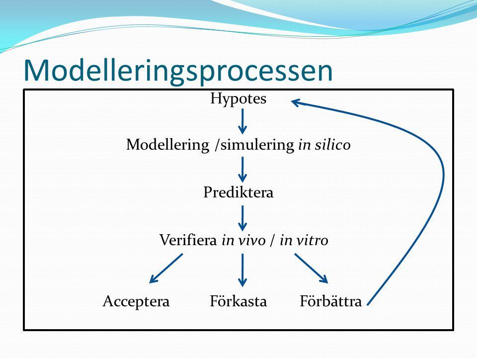 Modelleringsprocessen Hypotes Modellering /simulering in silico Prediktera Verifiera in vivo / in vitro Acceptera Förkasta Förbättra