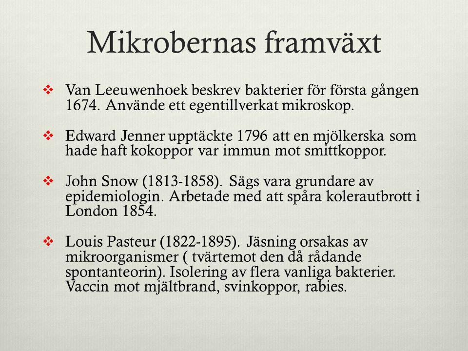 Mikrobernas framväxt  Van Leeuwenhoek beskrev bakterier för första gången 1674. Använde ett egentillverkat mikroskop.  Edward Jenner upptäckte 1796