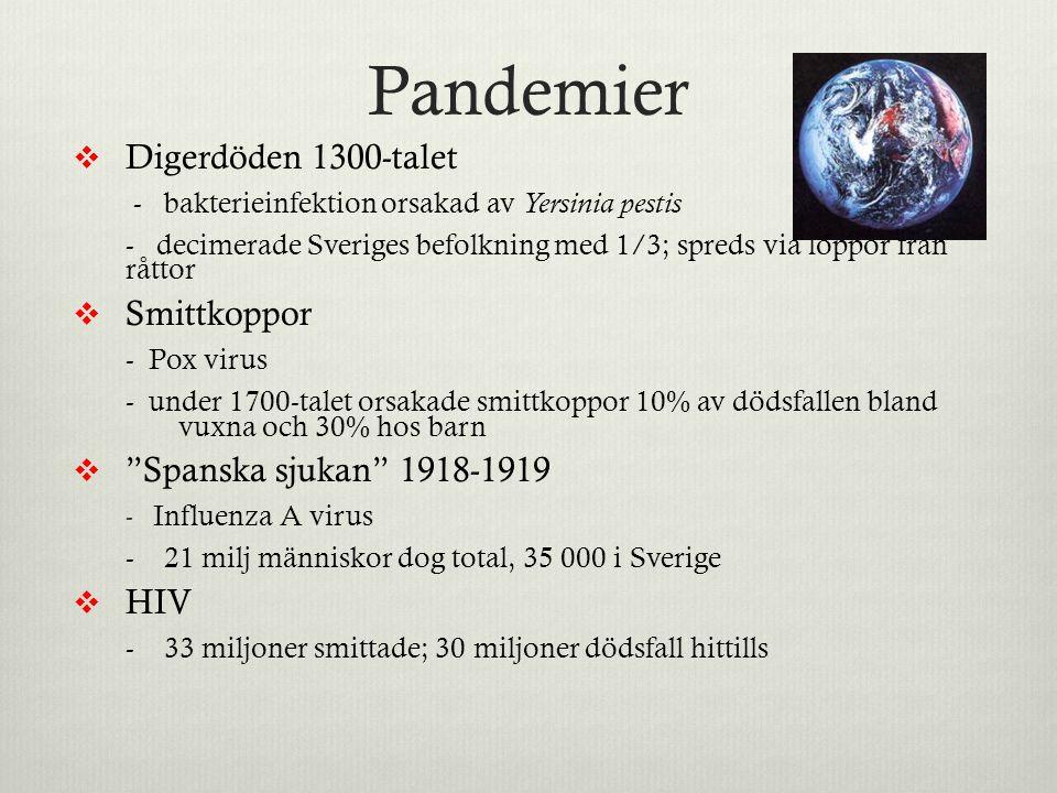 Pandemier  Digerdöden 1300-talet - bakterieinfektion orsakad av Yersinia pestis - decimerade Sveriges befolkning med 1/3; spreds via loppor från rått