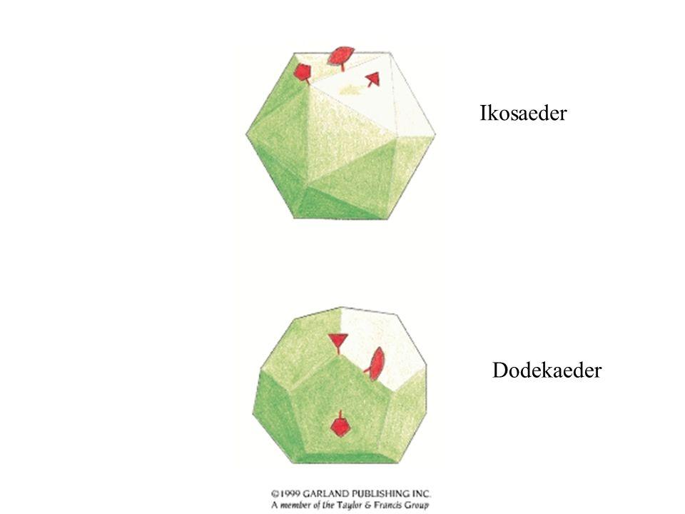Några exempel från PDB Bakteriofag phiX174 SV40 Poliovirus Rhinovirus med Pleconaril