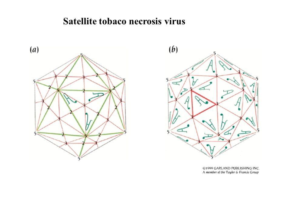 Satellite tobaco necrosis virus
