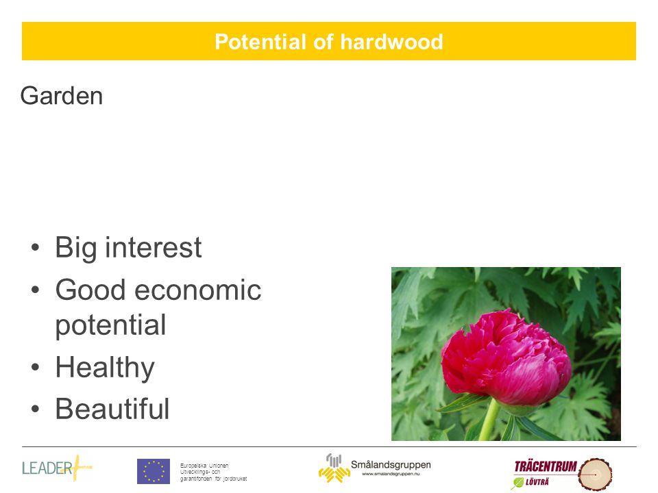 Potential of hardwood Europeiska Unionen Utvecklings- och garantifonden för jordbruket Garden Big interest Good economic potential Healthy Beautiful
