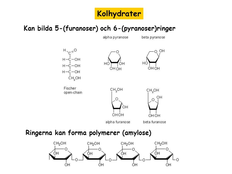 Kolhydrater Kan bilda 5-(furanoser) och 6-(pyranoser)ringer Ringerna kan forma polymerer (amylose)