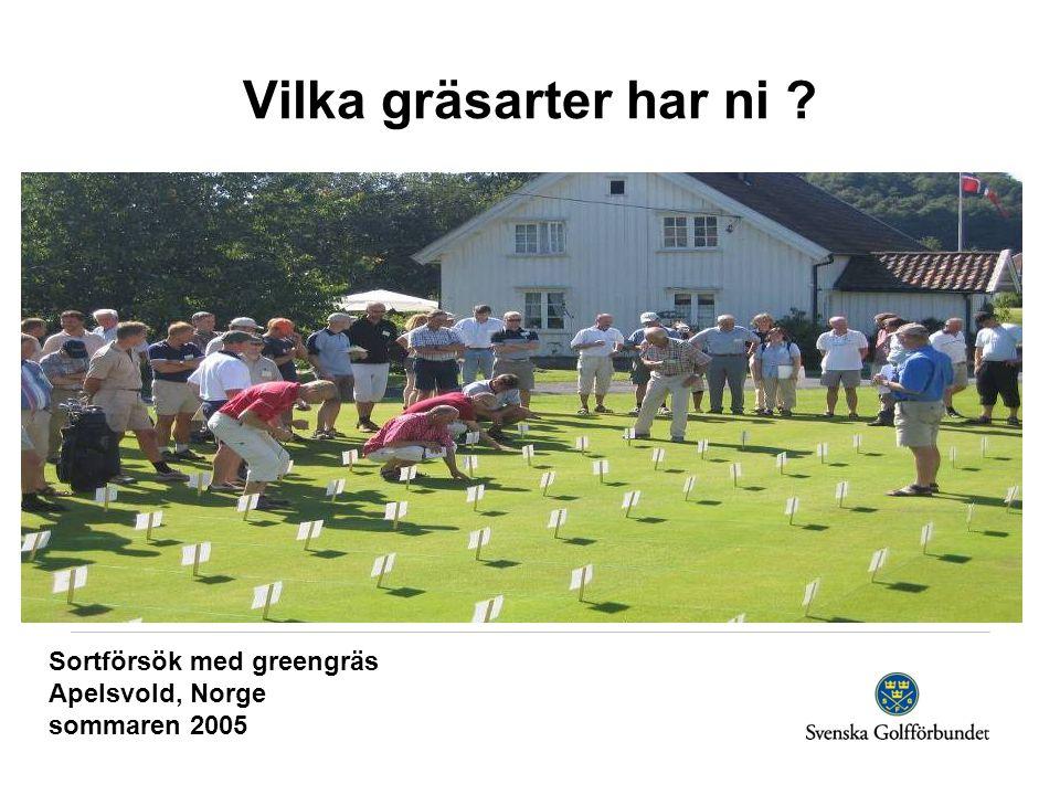 Sortförsök med greengräs Apelsvold, Norge sommaren 2005 Vilka gräsarter har ni
