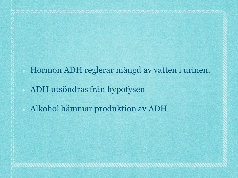 Hormon ADH reglerar mängd av vatten i urinen. ADH utsöndras från hypofysen Alkohol hämmar produktion av ADH