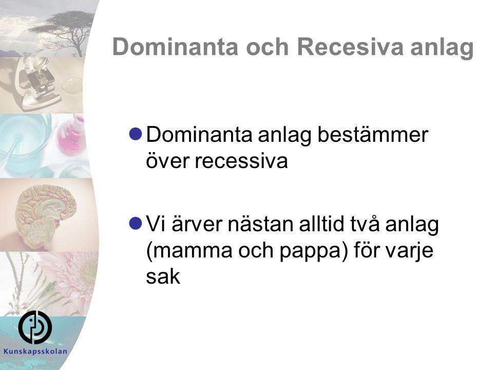 Dominanta och Recesiva anlag Dominanta anlag bestämmer över recessiva Vi ärver nästan alltid två anlag (mamma och pappa) för varje sak