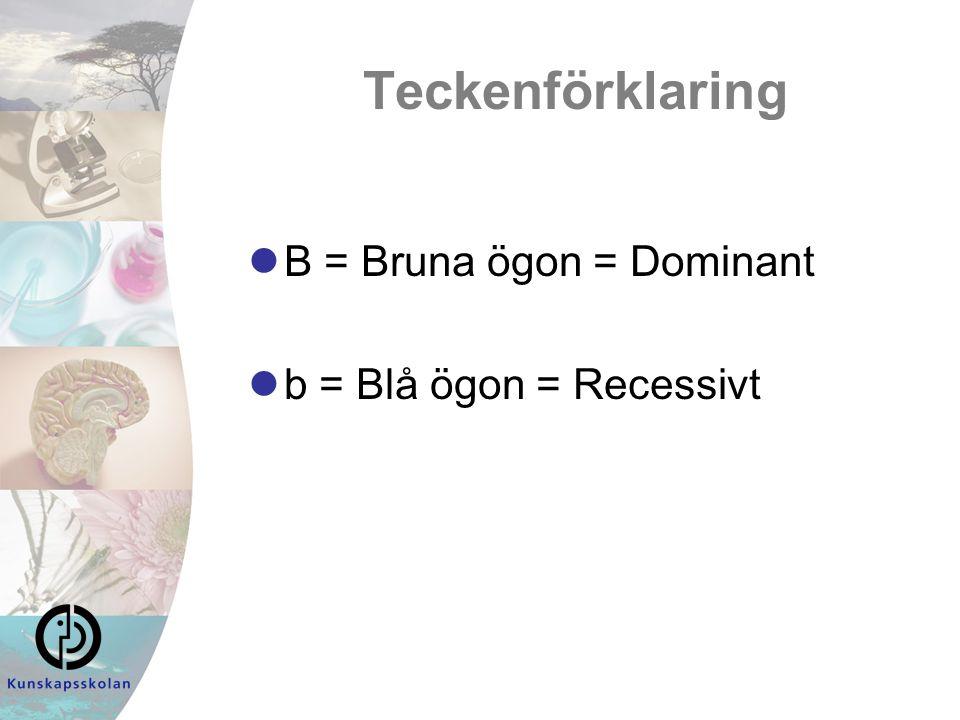 Teckenförklaring B = Bruna ögon = Dominant b = Blå ögon = Recessivt