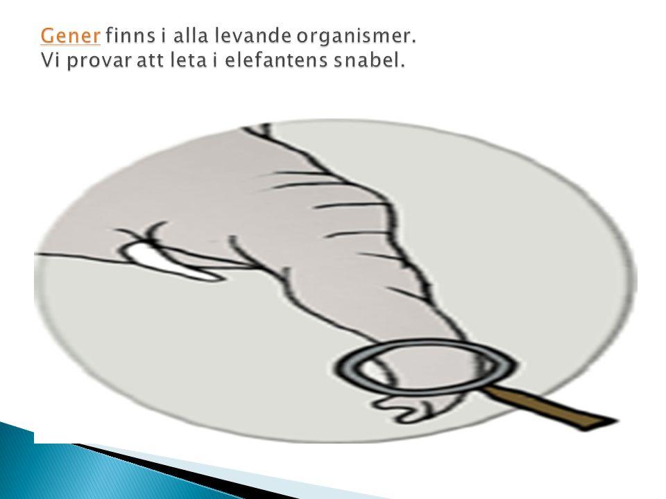  Könsceller kallas även för gameter  När gameterna sammansmälter bildar dem en befruktad äggcell, s.k.