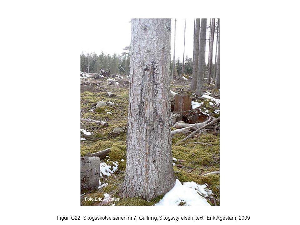 Figur G22. Skogsskötselserien nr 7, Gallring, Skogsstyrelsen, text: Erik Agestam, 2009
