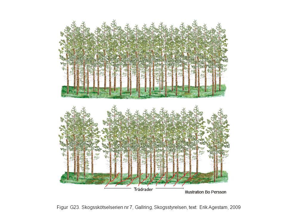 Figur G23. Skogsskötselserien nr 7, Gallring, Skogsstyrelsen, text: Erik Agestam, 2009