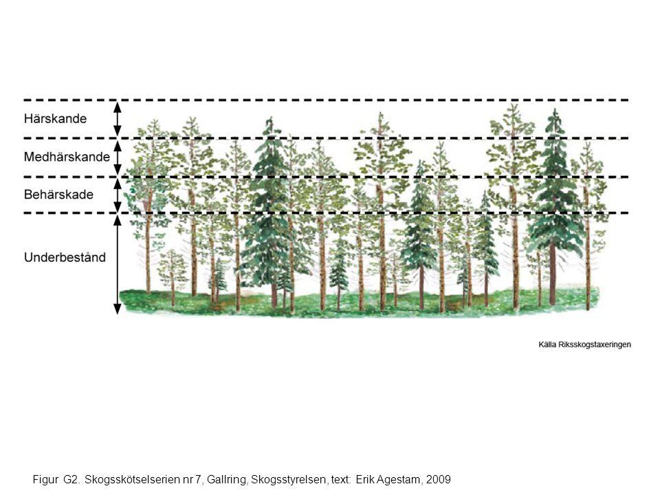 Figur G2. Skogsskötselserien nr 7, Gallring, Skogsstyrelsen, text: Erik Agestam, 2009