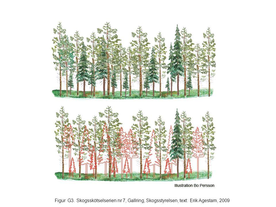 Figur G14. Skogsskötselserien nr 7, Gallring, Skogsstyrelsen, text: Erik Agestam, 2009
