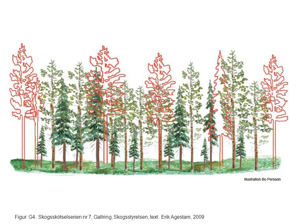 Figur G25. Skogsskötselserien nr 7, Gallring, Skogsstyrelsen, text: Erik Agestam, 2009
