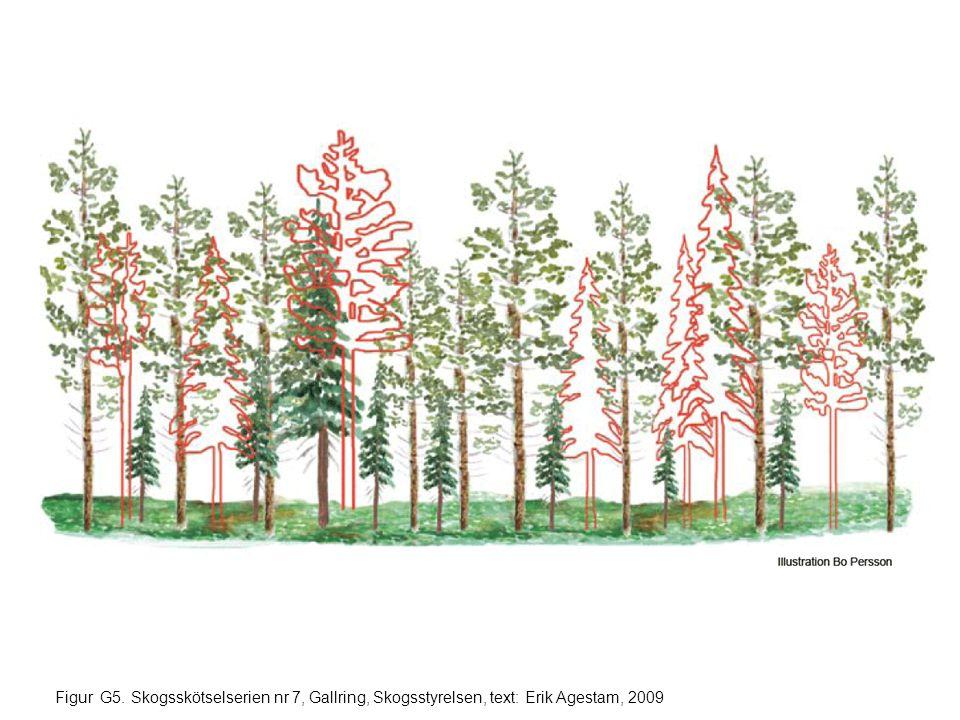 Figur G36. Skogsskötselserien nr 7, Gallring, Skogsstyrelsen, text: Erik Agestam, 2009
