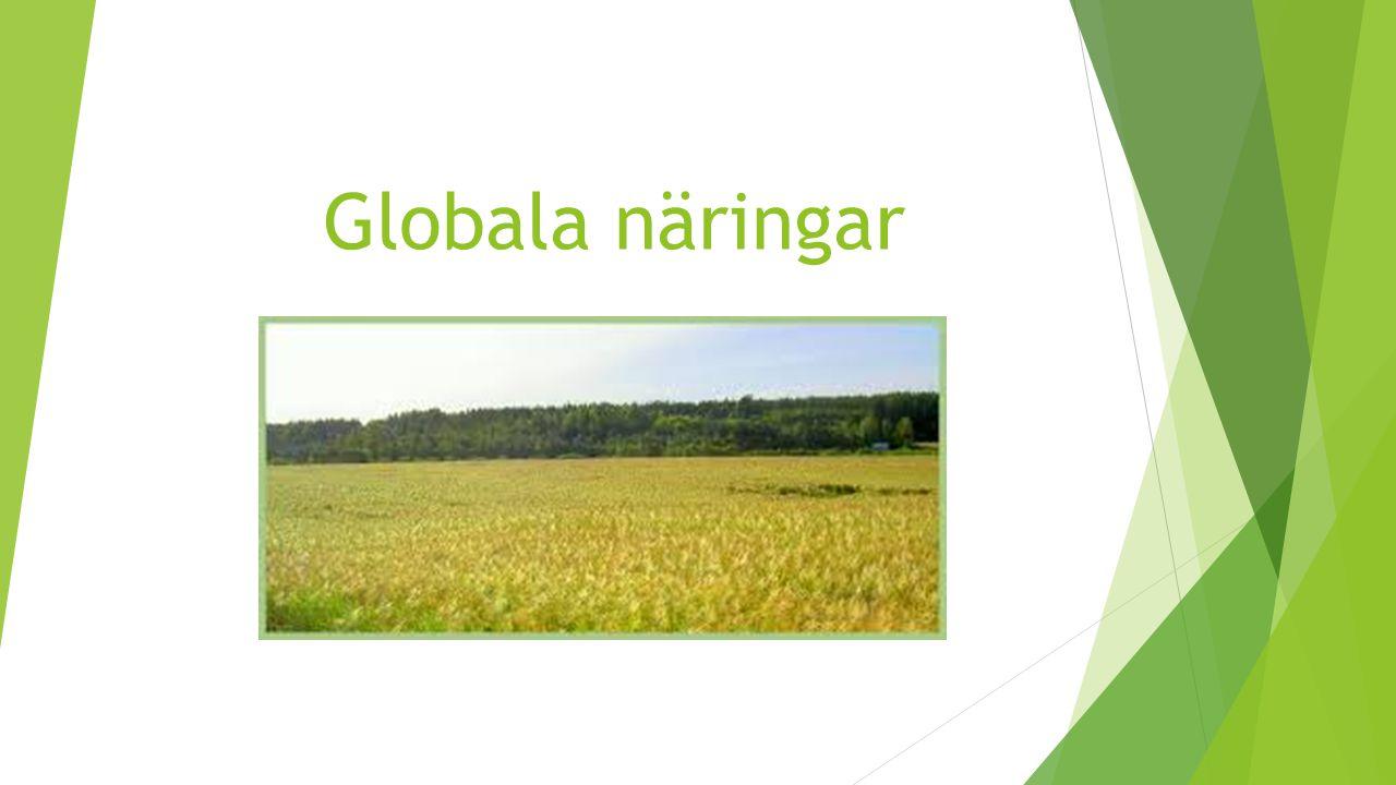 Jordbruk i världen Andel av befolkningen som arbetade med jordbruk och boskapsskötsel 2005 i procent USA 1,5 % Sverige 2,0 % Brasilien 20,5 % Indien 57,5 % Niger 45,5 % Etiopien 80,0 % De mer utvecklade länderna (USA och Sverige) driver stora moderna jordbruk med mycket hög grad av avsaluproduktion.