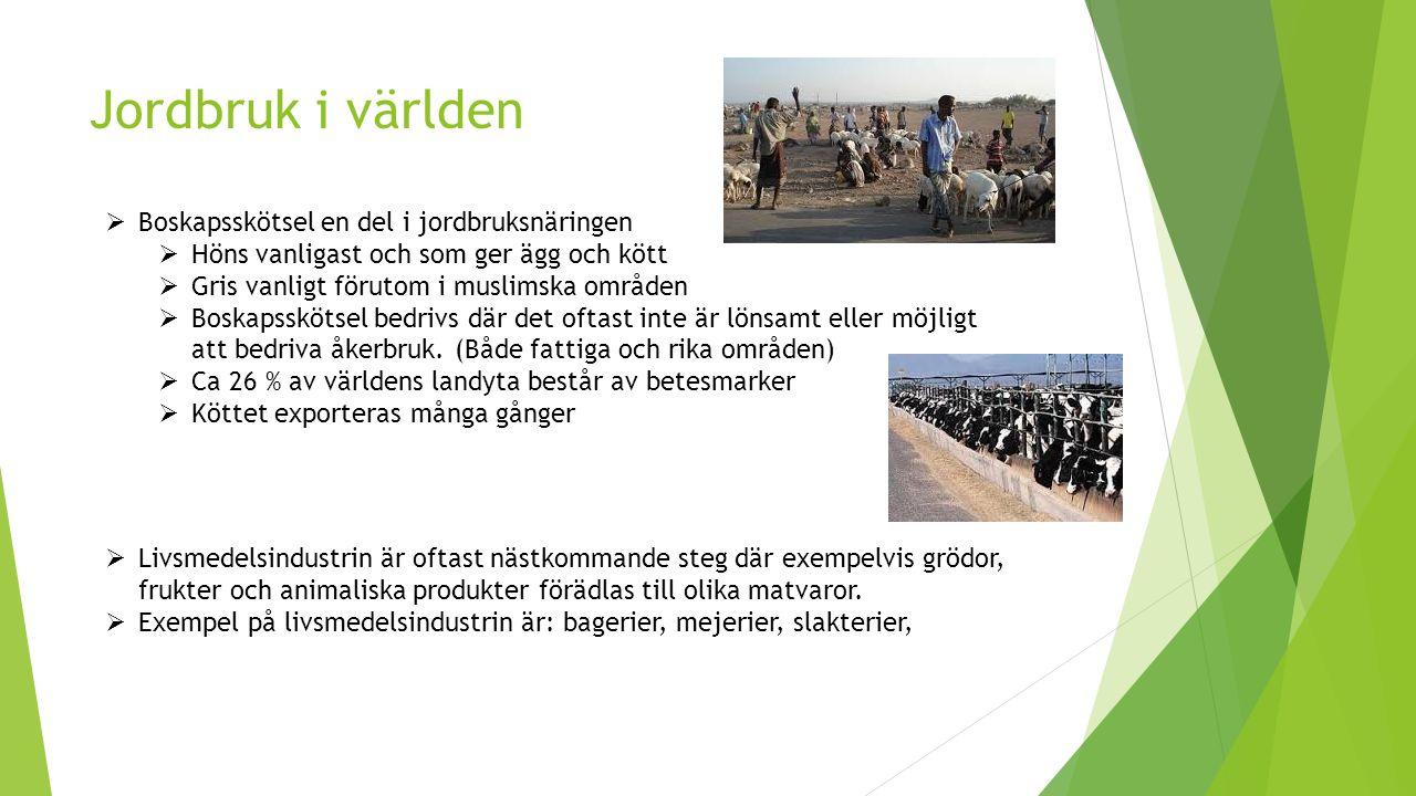 Jordbruk i världen  Boskapsskötsel en del i jordbruksnäringen  Höns vanligast och som ger ägg och kött  Gris vanligt förutom i muslimska områden  Boskapsskötsel bedrivs där det oftast inte är lönsamt eller möjligt att bedriva åkerbruk.