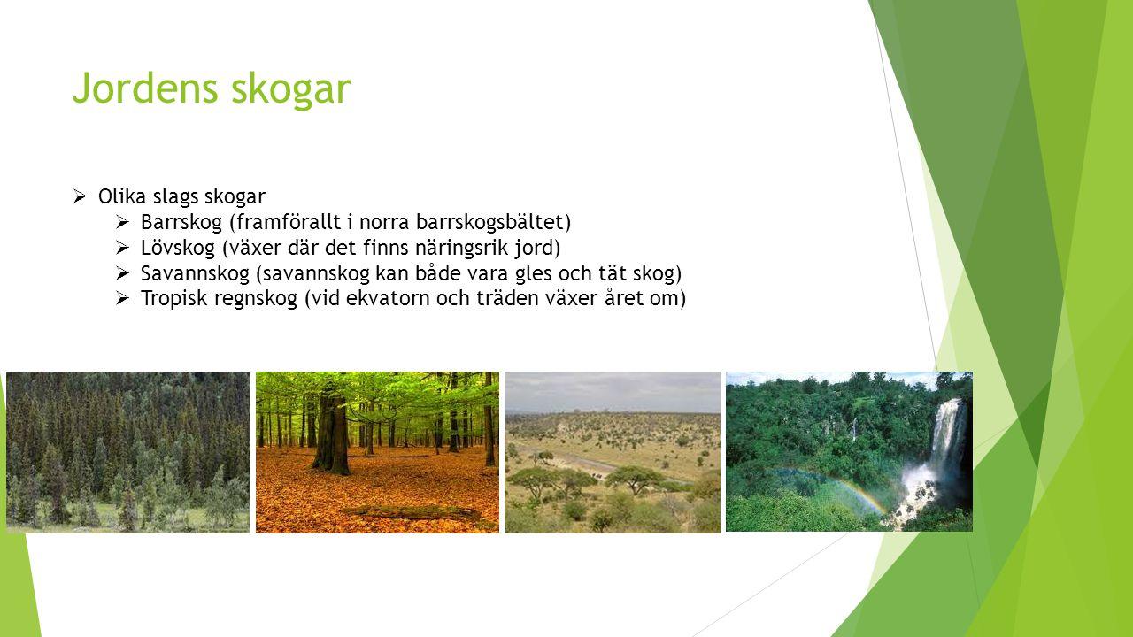  Olika slags skogar  Barrskog (framförallt i norra barrskogsbältet)  Lövskog (växer där det finns näringsrik jord)  Savannskog (savannskog kan både vara gles och tät skog)  Tropisk regnskog (vid ekvatorn och träden växer året om)