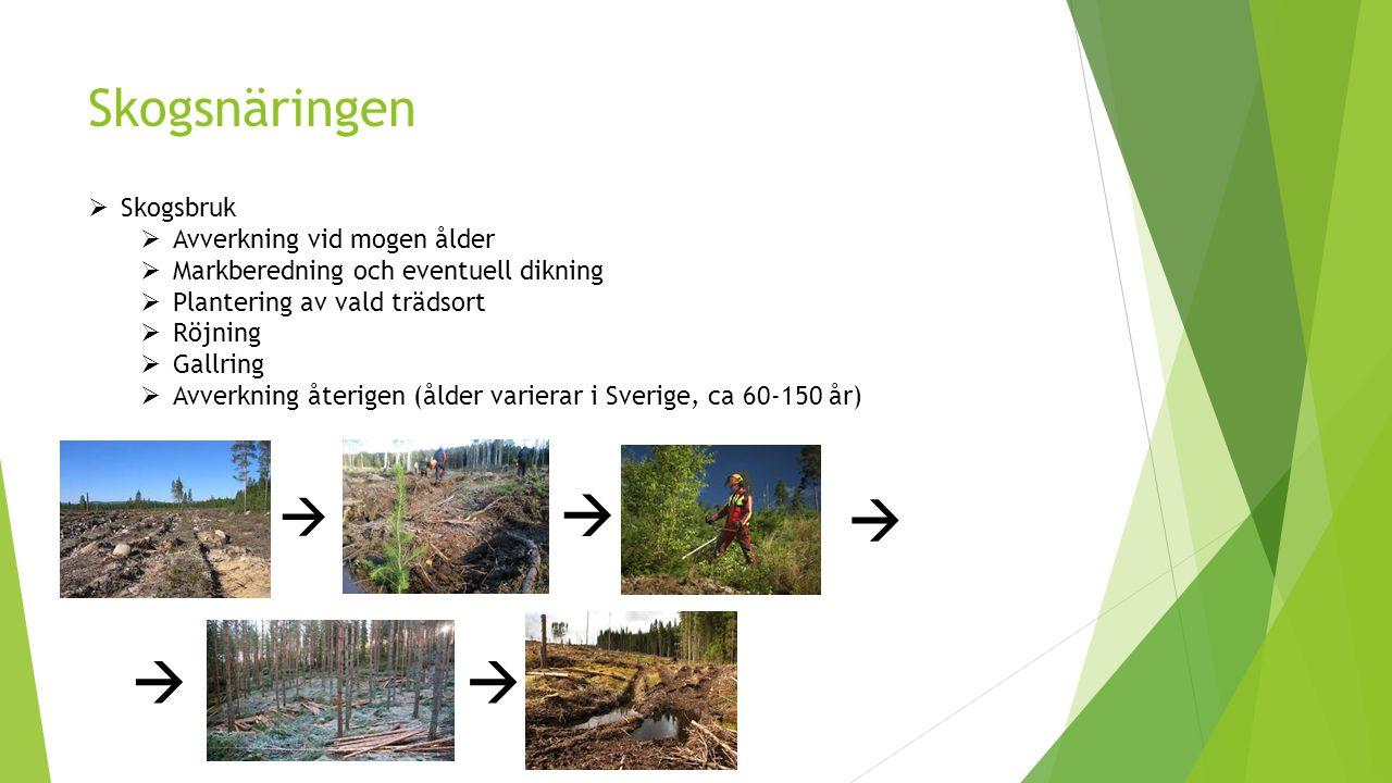 Skogsnäringen  Skogsbruk  Avverkning vid mogen ålder  Markberedning och eventuell dikning  Plantering av vald trädsort  Röjning  Gallring  Avve