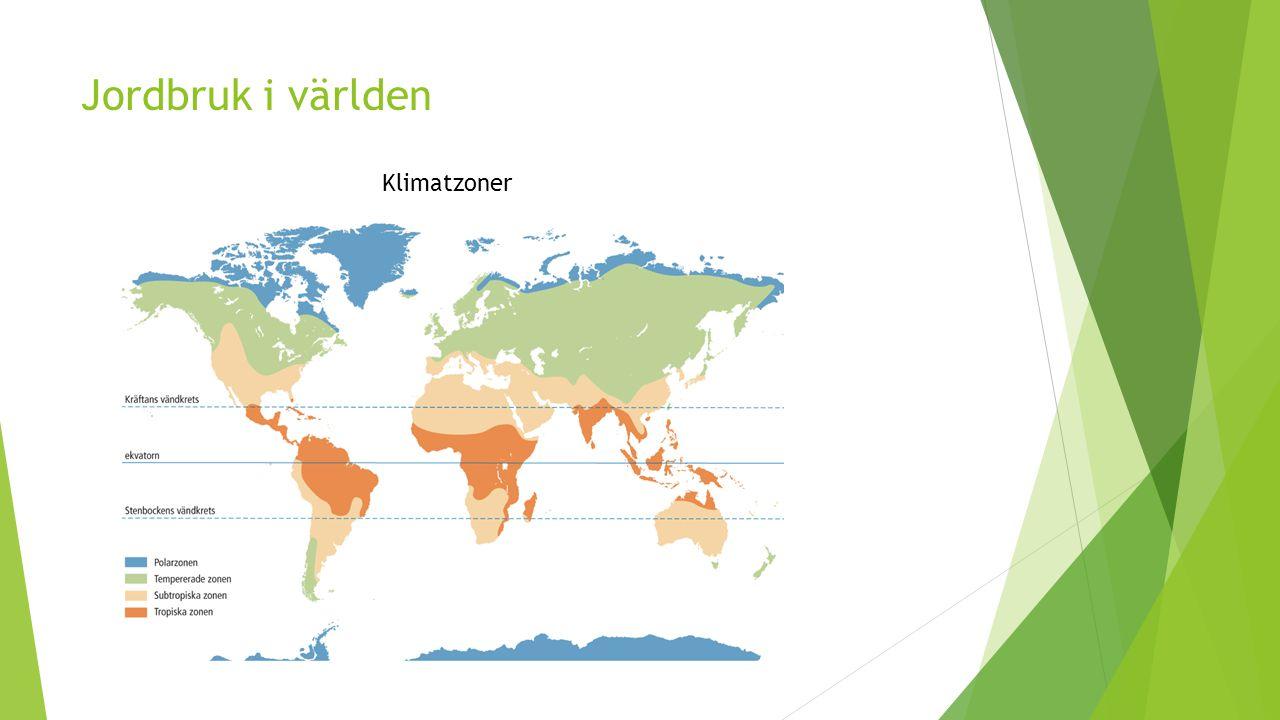 Jordbruk i världen  Olika förutsättningar för odling  Tropiska zonen (närmast ekvatorn)  Regnar kraftigt varje dag och hög fuktighet  Säd kan ej mogna i sådant klimat  Frukt och grönsaker året om  Plantageodlingar (ex.