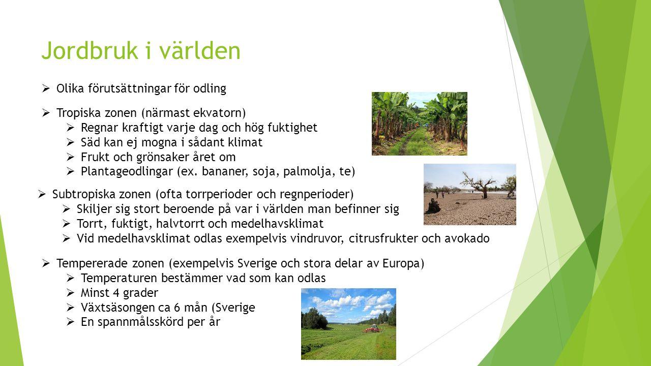 Skogsnäringen  Skogsbruk  Avverkning vid mogen ålder  Markberedning och eventuell dikning  Plantering av vald trädsort  Röjning  Gallring  Avverkning återigen (ålder varierar i Sverige, ca 60-150 år)    