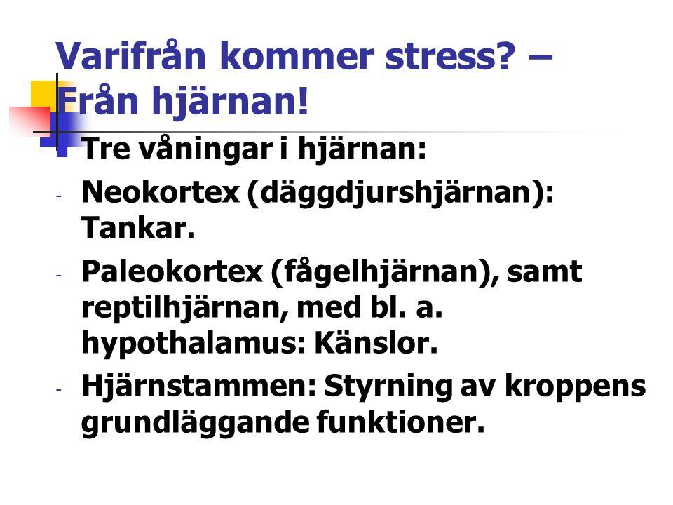 Varifrån kommer stress? – Från hjärnan! Tre våningar i hjärnan: - Neokortex (däggdjurshjärnan): Tankar. - Paleokortex (fågelhjärnan), samt reptilhjärn