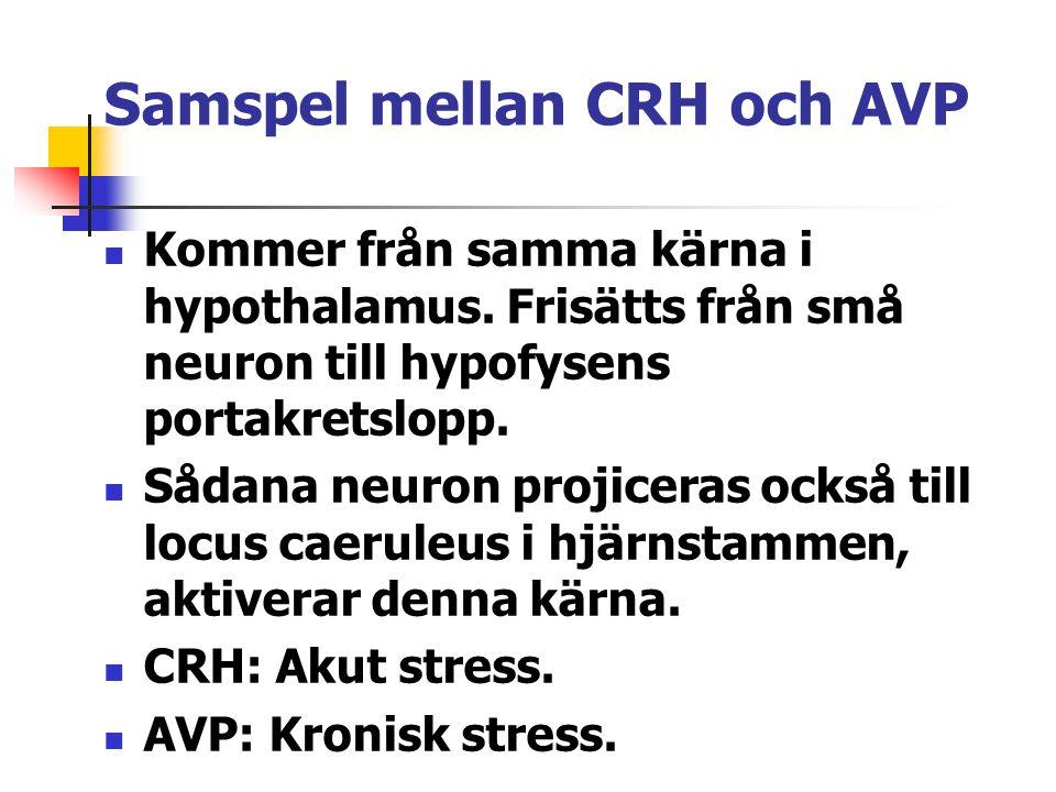 Samspel mellan CRH och AVP Kommer från samma kärna i hypothalamus. Frisätts från små neuron till hypofysens portakretslopp. Sådana neuron projiceras o