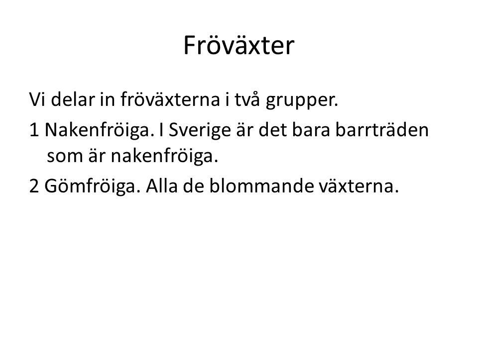 Fröväxter Vi delar in fröväxterna i två grupper. 1 Nakenfröiga. I Sverige är det bara barrträden som är nakenfröiga. 2 Gömfröiga. Alla de blommande vä