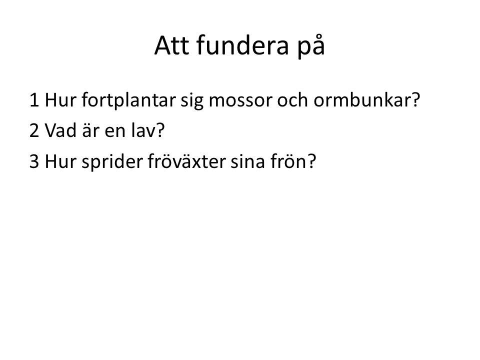 Att fundera på 1 Hur fortplantar sig mossor och ormbunkar? 2 Vad är en lav? 3 Hur sprider fröväxter sina frön?