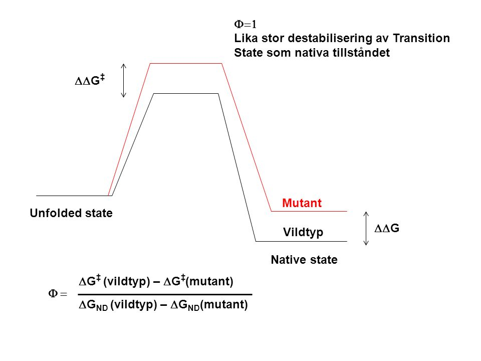 Unfolded state Native state Vildtyp Mutant  G ‡  G  Lika stor destabilisering av Transition State som nativa tillståndet  G ‡ (vildtyp) –  G ‡ (mutant)  G ND (vildtyp) –  G ND (mutant) 
