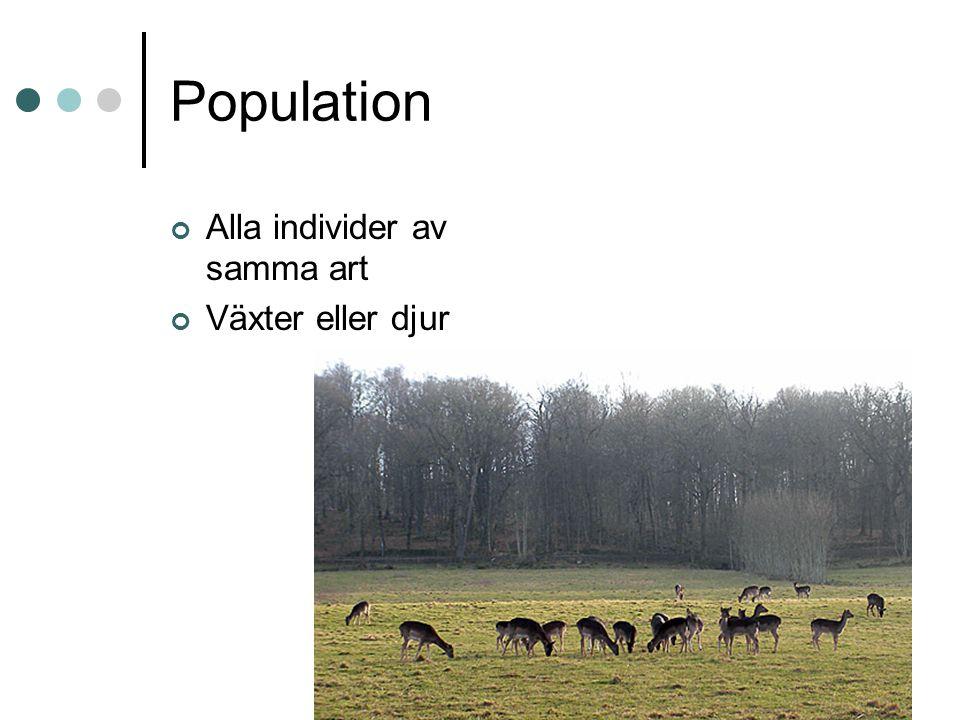 Population Alla individer av samma art Växter eller djur