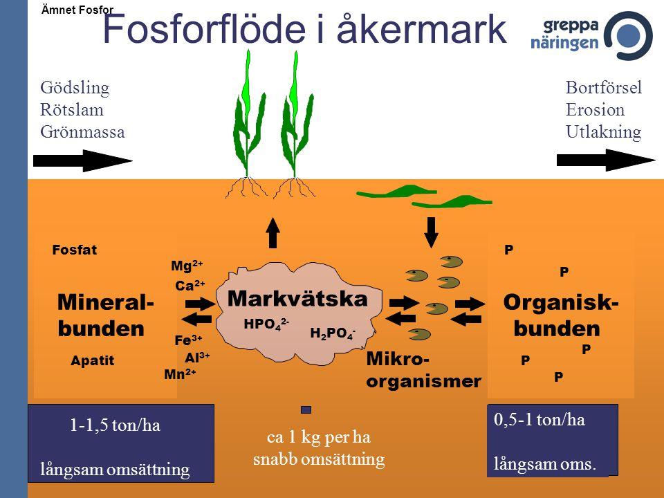 Markvätska H 2 PO 4 - Mineral- bunden Apatit Fosfat Organisk- bunden P P P P P Mikro- organismer Gödsling Rötslam Grönmassa Bortförsel Erosion Utlakni