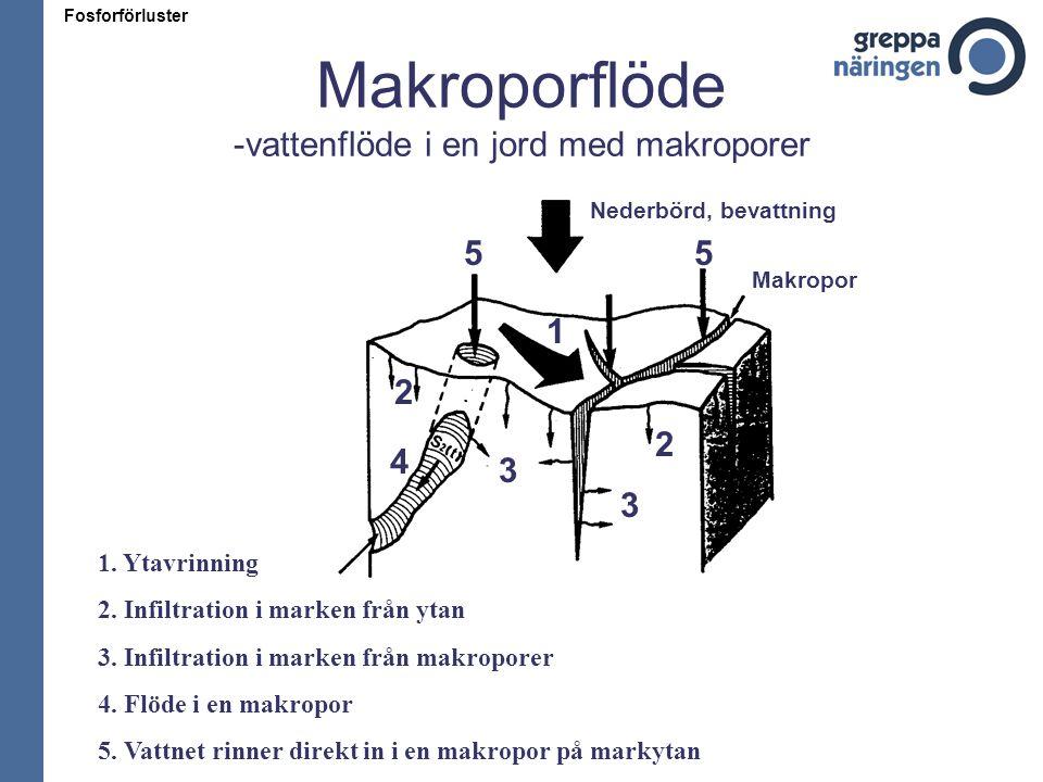 Makroporflöde -vattenflöde i en jord med makroporer Fosforförluster 1. Ytavrinning 2. Infiltration i marken från ytan 3. Infiltration i marken från ma